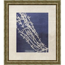 Coral II Framed Graphic Art