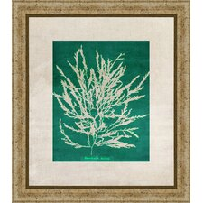 Emerald Coral III Giclée Framed Graphic Art