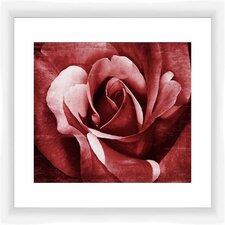 Crimson Rose II Framed Graphic Art