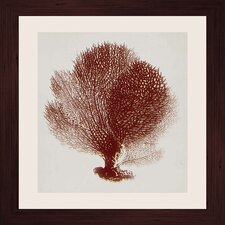 Crimson Coral I Framed Graphic Art
