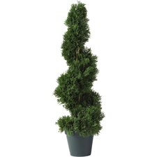 Cedar Spiral Round Tapered Topiary with Pot