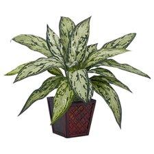 Desk Top Plant in Pot (Set of 2)