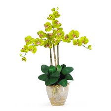 Triple Phalaenopsis Silk Orchid Flowers in Green