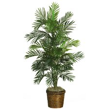 Areca Palm Silk Tree in Basket
