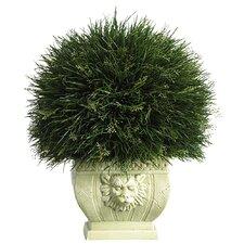 Potted Desk Top Plant in Decorative Vase