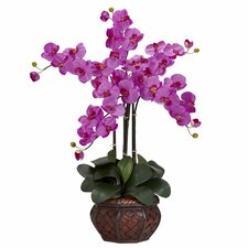 Phalaenopsis with Decorative Vase Silk Flower Arrangement