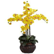 Phalaenopsis with Decorative Vase Silk Flower Arrangement in Yellow