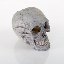 Decorative Human Skull