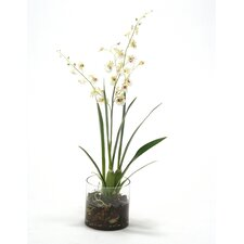 Waterlook® DancIng Orchids with Foliage in Cylinder Glass Vase