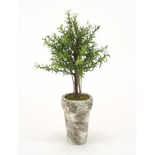 Silk Double Rosemary Topiary in French Pot