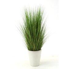 Silk Grass in Pot