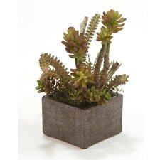 Faux Succulents with Desert Boxwood Floor Plant in Planter