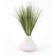 Basil Grass in Round Tapered Ceramic Decorative Vase