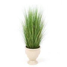 Varicolored Silk Grass in Round Urn