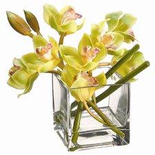 Green Cymbidium Orchid in Square Vase