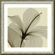 'Hibiscus' by Steven N. Meyers Framed Photographic Print