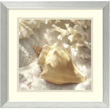 'Coral Shell IV' by Donna Geissler Framed Photographic Print