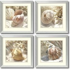 'Coral Shell' by Donna Geissler 4 Piece Framed Photographic Print Set