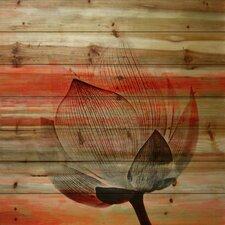 "Floral & Botanical ""Rose Petal"" Graphic Art"
