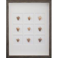 Dogg Conch Shells Wall Art Shadow Box in Brown