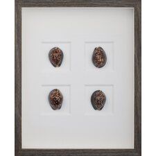 Morning Cowrie Shells Wall Art Shadow Box in Brown