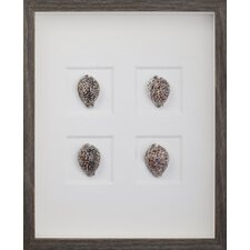 Tiger Cowrie Shells Wall Art Shadow Box in Brown