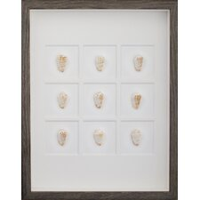 Strawberry Conch Shells Wall Art Shadow Box in Brown/White