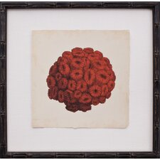 Mini Red Coral I Framed Graphic Art