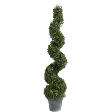 Spiral Boxwood Topiary in Pot