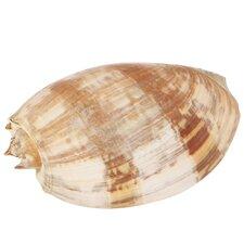 Natural Shell Decor