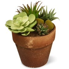 Sukkulent Floor Plant in Pot