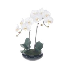 "Phalaenopsis 23.25"" x 13.75"" Centerpiece with Base"