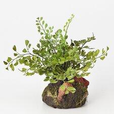 Maidenhair Fern Plant Drop-In (Set of 6)