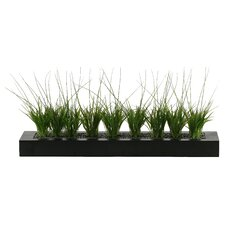 Onion Grass in Rectangular Planter