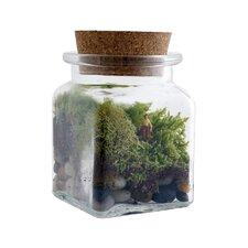 Le Petit Singularite Desk Top Plant in Terrarium