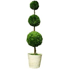 Boxwood Triple Ball Topiary in Pot