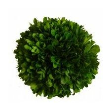 Boxwood Ball Desk Top Plant