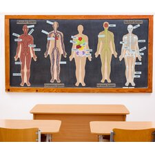 Educational Human Body Wall Decal