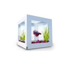 DecoCubes 1 Pack Terrarium