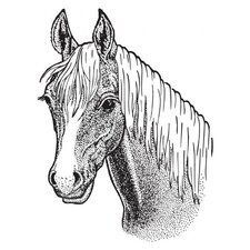 Mounted Rubber Horse Stamp