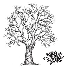 Mounted Rubber Tree and Foliage Stamp