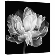 """Tulipa Double Black & White II"" by Cora Niele Photographic Print on Canvas"