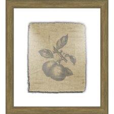 Pears Framed Graphic Art