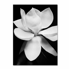"""Magnolia"" by Michael Harrison Photographic Print on Wrapped Canvas"