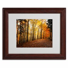 'Autumn Leaves' by Philippe Sainte-Laudy Framed Photographic Print