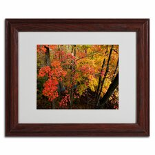 'Brilliant Autumn Forest' by Kurt Shaffer Framed Photographic Print