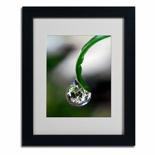 'Drop of Clementis' by Steve Wall Framed Photographic Print