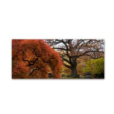 """Beautiful Slice of Autumn"" by Kurt Shaffer Photographic Print on Wrapped Canvas"