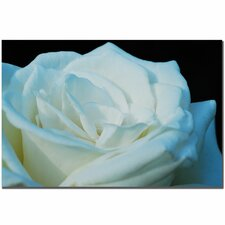 'White Rose' by Kurt Shaffer Photographic Print on Canvas