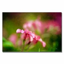 'Pink Phlox' by Lois Bryan Photographic Print on Canvas